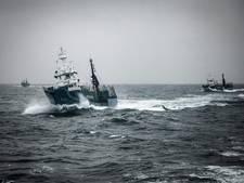 Japanse vissers doden meer dan honderd walvissen