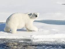 Russische wetenschappers bevrijd van ijsberen