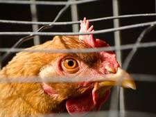 Kinderboerderij Culemborg weer open, ophokplicht blijft