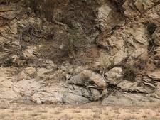 Zoekplaatje: dwergantilopen ware camouflagemeesters