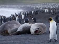 Gastblog - Antarctica on the rocks