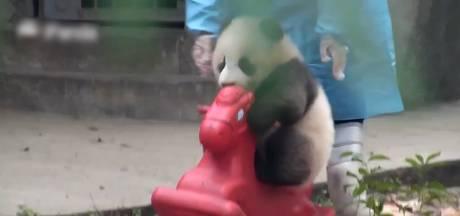 Klungelige babypanda en zijn speelgoedpaard