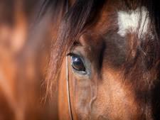 Honger in Venezuela: paard in dierentuin geslacht