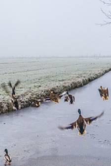 Delft op zijn mooist tijdens koudste dag van het jaar