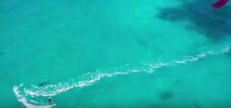 Drone filmt enorme mensenhaai onder kitesurfster