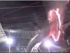 Gruwelijke circusact: dolfijnen springen door brandende ringen