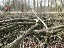 Groot onderhoud paden Haagse Bos