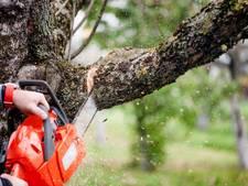 Kap van 'slechts' 58 bomen op Wageningen Hoog