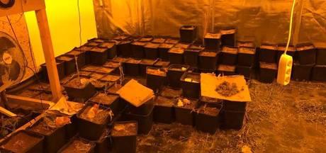 600 wietplanten ontdekt in woning in Westervoort