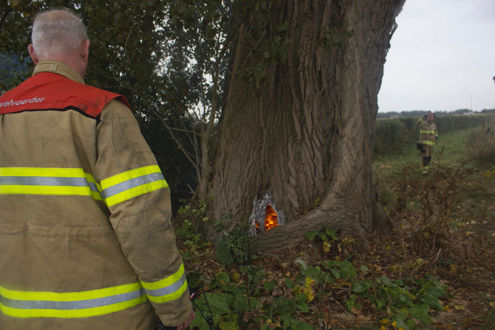 De brand woedde binnen in de monumentale boom.