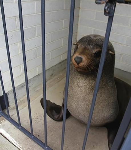 Vrouw treft slapende zeehond aan op toilet