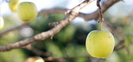 Gif spuiten op fruitbomen bij Huissense woning mag