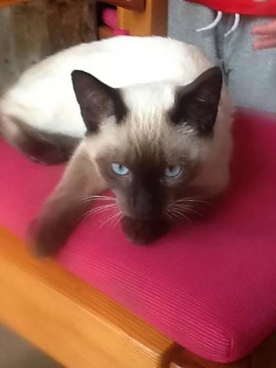 Kat met geweld gedood in Lunetten