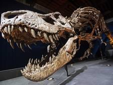 Drukte in Naturalis op eerste dag expositie Tyrannosaurus