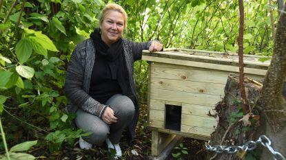 In de thuisgemeente van minister van Dierenwelzijn Weyts (N-VA) vinden zwerfkatten voortaan ook onderdak