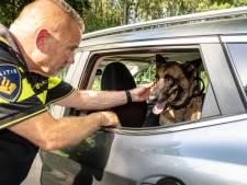 Politie is helemaal klaar met baasjes die hun hond 'even' in snikhete auto achterlaten: 'Dit is gewoon een misdrijf'