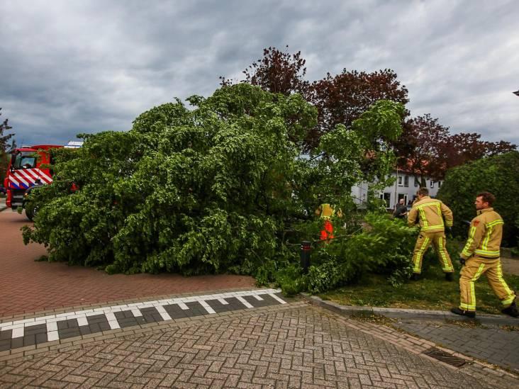 Zware windstoten zorgen voor consternatie in Asten, geen gewonden bij omgewaaide boom