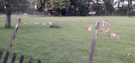 Voorzitter kinderboerderij: 'Absoluut goede hoop dat herten in Terneuzen kunnen blijven'