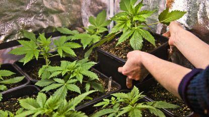 """Opinie. """"Terwijl cannabisclubs veroordeeld worden, renteniert de criminele ondernemer"""""""