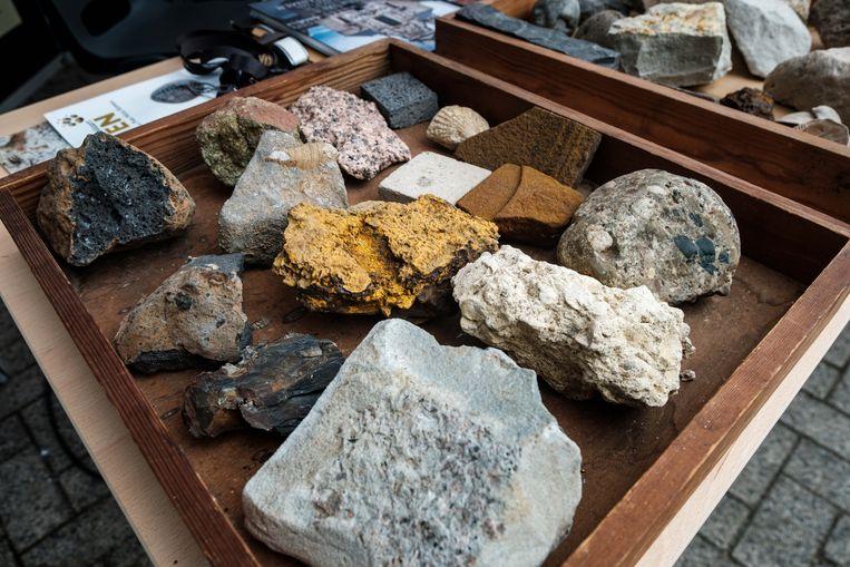 Langs het stenenpad op Kattevennen in Genk liggen deze oeroude exemplaren. Ze vertellen het verhaal van 500 miljoen jaar geschiedenis van de aarde én de klimaatverandering.