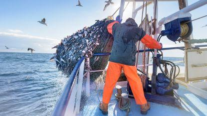 Europese Commissie treft noodmaatregelen om visserijsector te beschermen bij 'no deal'