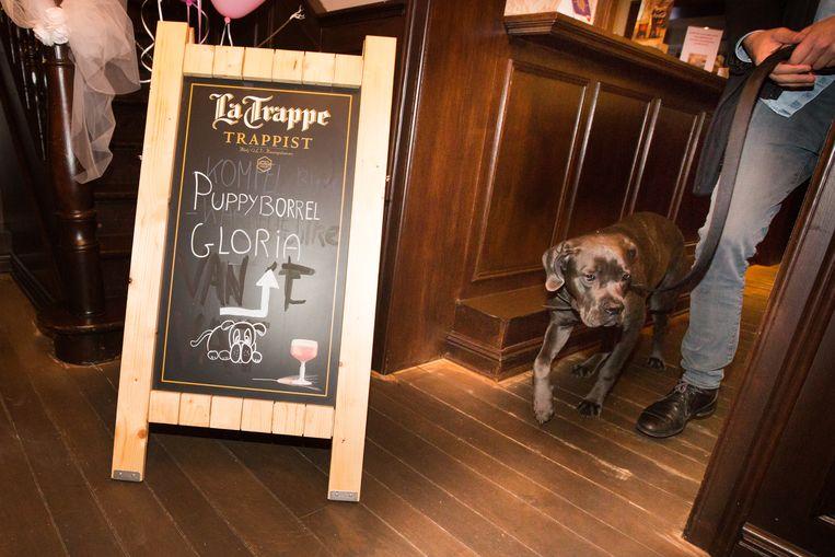 De 'puppyborrel' voor Gloria.
