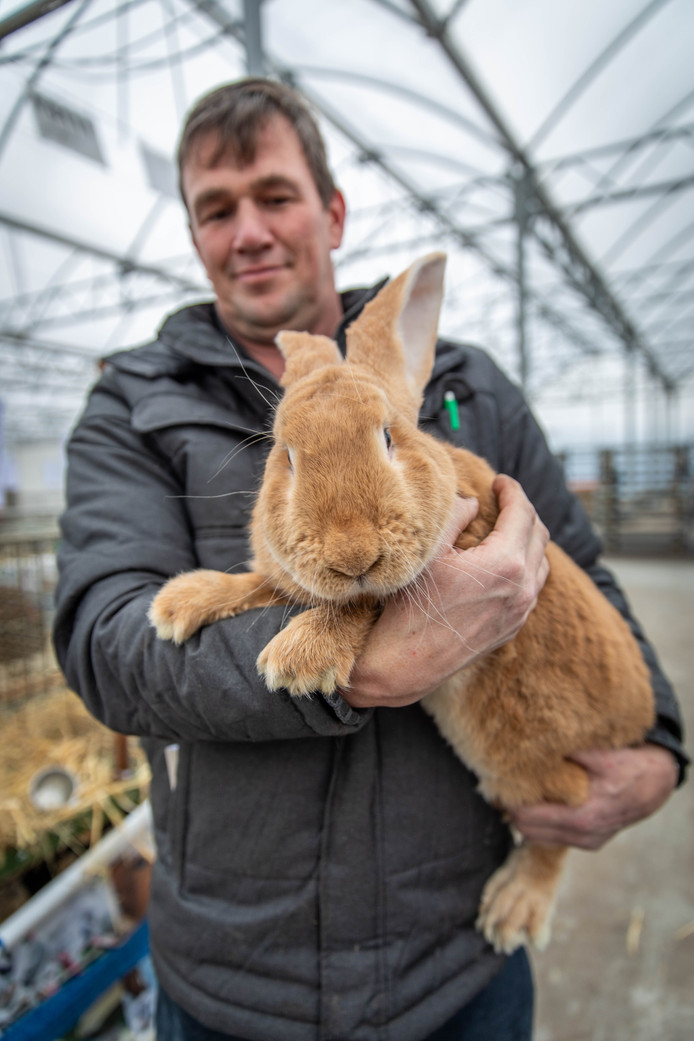 Deze Gele Vlaamse Reus is één van de dieren die hobbyfokker en tentoonstellingssecretaris Erik Schrijver heeft meegenomen naar de jaarlijkse show van kleindierenvereniging KPS-Zeelandia.