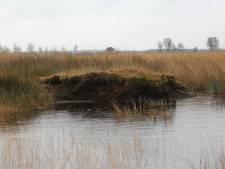 Zwaar weer dreigt voor boeren bij Wierdense Veld: 'Misschien moeten we ons laten uitkopen'