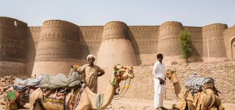Au Pakistan, les combats de chameaux font fureur malgré leur illégalité