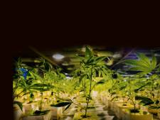 Wietplantage gevonden in bedrijfspand Almere