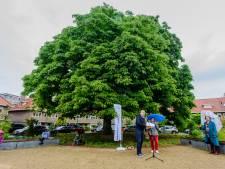 De mooiste boom van Zeist zingt een vrolijk deuntje