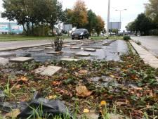 Plastic zeil en stoeptegels in strijd tegen Duizendknoop in Deventer