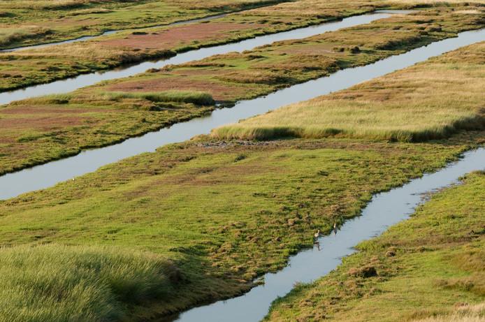 Karrevelden aan de zuidkust, het leefgebied voor de Noordse Woelmuis.