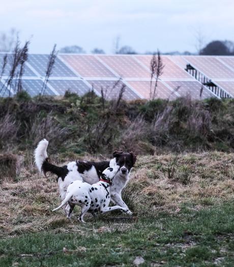Stroomfiles door zonneparken: help, het elektriciteitsnet raakt vol!