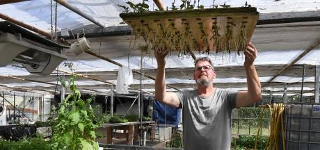 De poepende karpers van Jos laten tomaten en basilicum groeien
