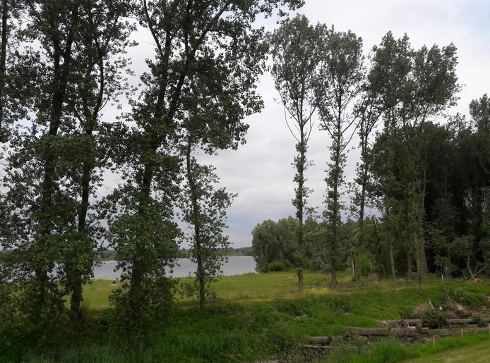 De Vonkerplas in de uiterwaarden bij Dreumel, Staatsbosbeheer wil de plas minder diep maken door er grond in te storten.