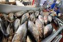 De verwerking van tonijn in een fabriek in Italië.