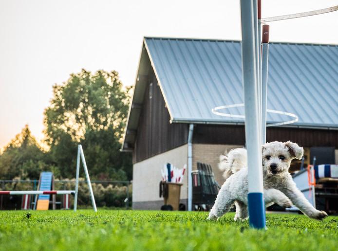 Bij KC Delft zijn alle soorten honden en hun baasjes welkom om aan hondensport te doen.