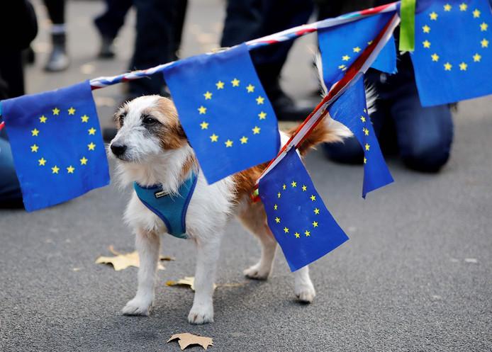 Tegenstanders van brexit demonstreerden ook en namen hondjes mee met EU-vlaggen.