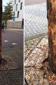 Vechthond stortte zich 'als een wilde' op boom Stationsplein Apeldoorn