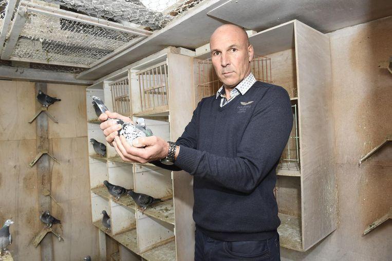 Een vijftigtal duiven van Frans Bungeneers werd gestolen.