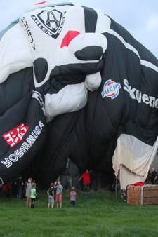Grootste ballon ter wereld landt in boom