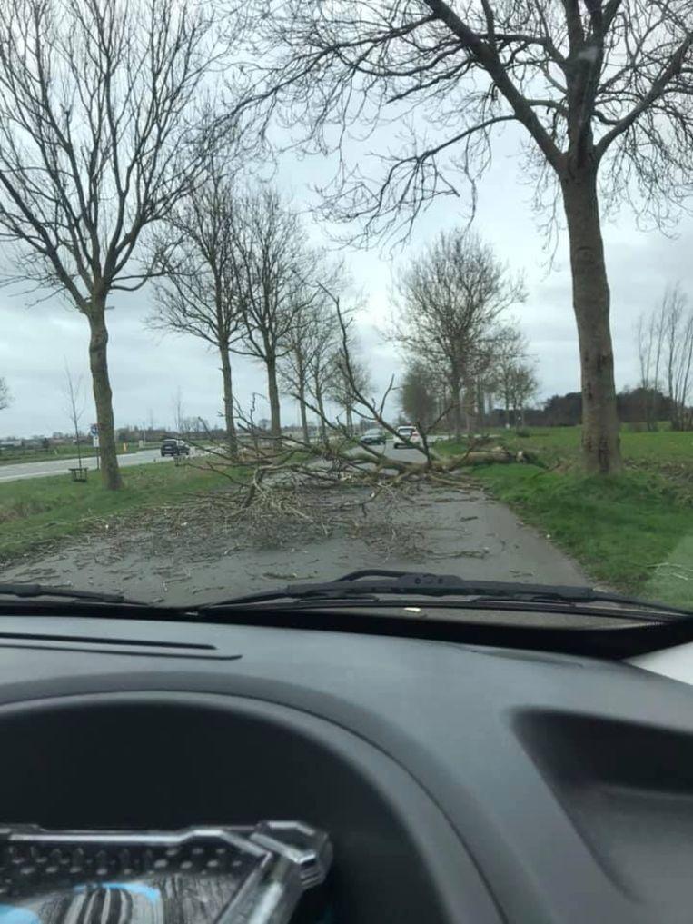 Een voorbijganger postte de foto van de gesneuvelde boom op Facebook.