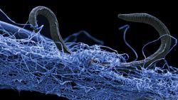 Wetenschappers ontdekken gigantisch ecosysteem onder het aardoppervlak, bijna dubbel zo groot als in alle oceanen samen