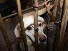 Honderd 'zieke en bange' honden weggehaald bij fokker