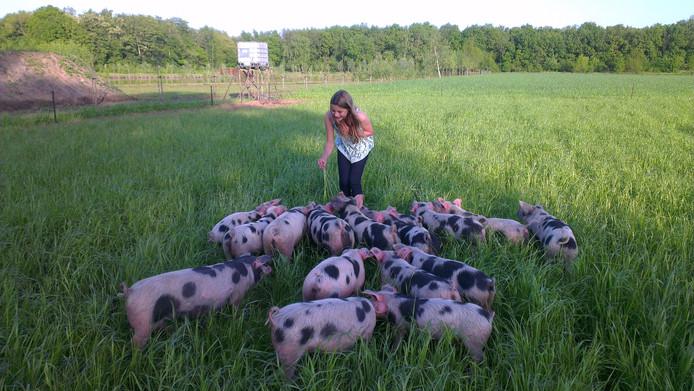 De buitengewone varkens van Gloudemans waren een attractie op de Vlagheide in Schijndel.
