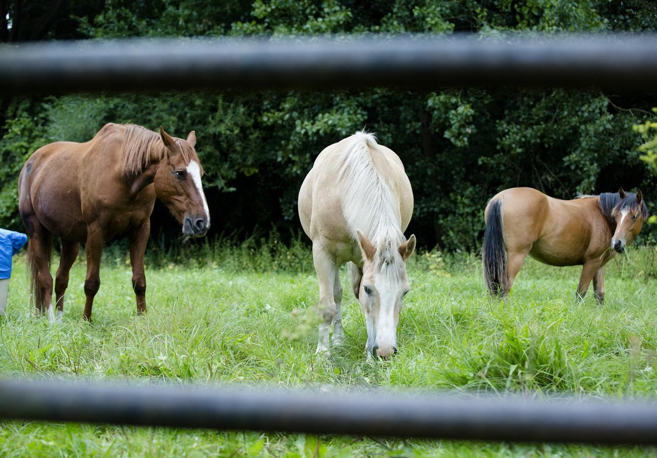 De politie adviseert om paarden niet met een halster om in de wei te zetten waardoor het voor een paardenbeul moeilijker wordt om het dier vast te houden en te mishandelen.