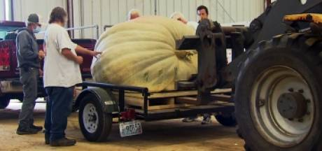 Il remporte un concours de citrouilles géantes avec un fruit de 900 kg
