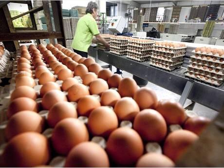 Kippeneieren mogelijk vergiftigd met verboden bestrijdingsmiddel