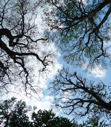 Bocholt kapt tientallen bomen die dood zijn door twee droge zomers